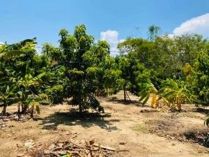 Cần bán lô đất vườn